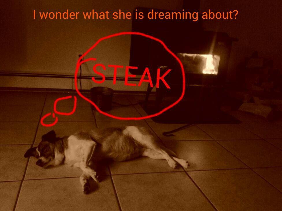 Steak!!! Neon signs, All about animals, Steak