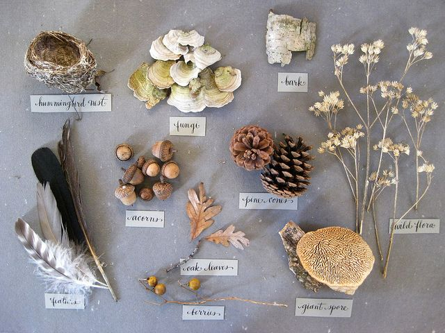 love! / gollybard's collection of nature specimens from daily walks through the woods and fields.