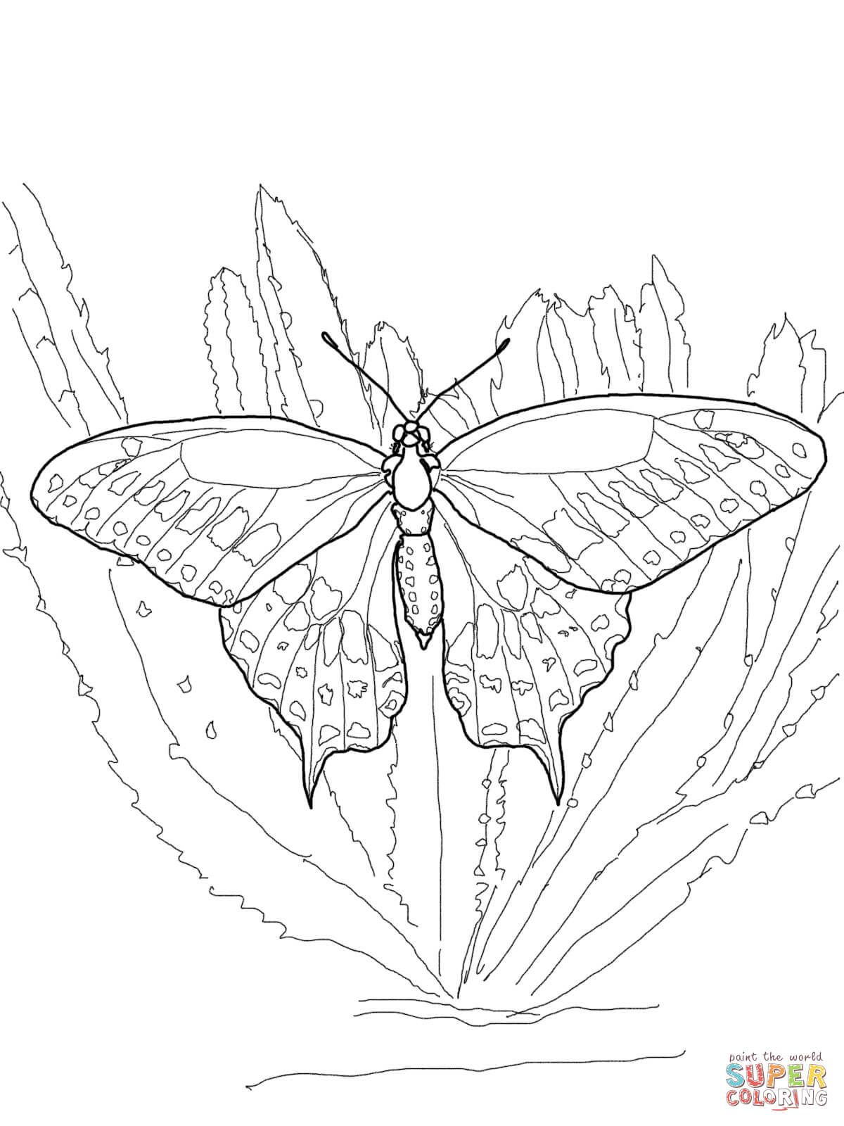 Black Swallowtail Super Coloring Butterfly Coloring Page