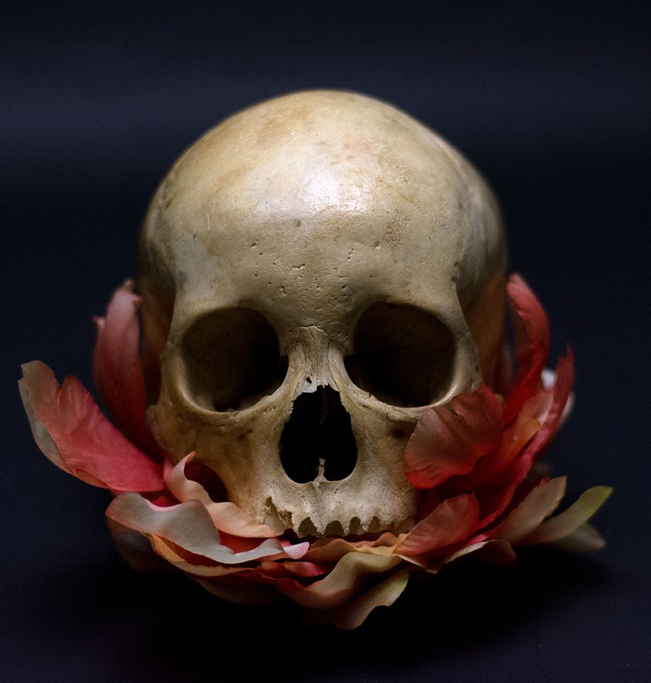 Human Jaw Tattoo: Resultado De Imagen Para Skulls Reference