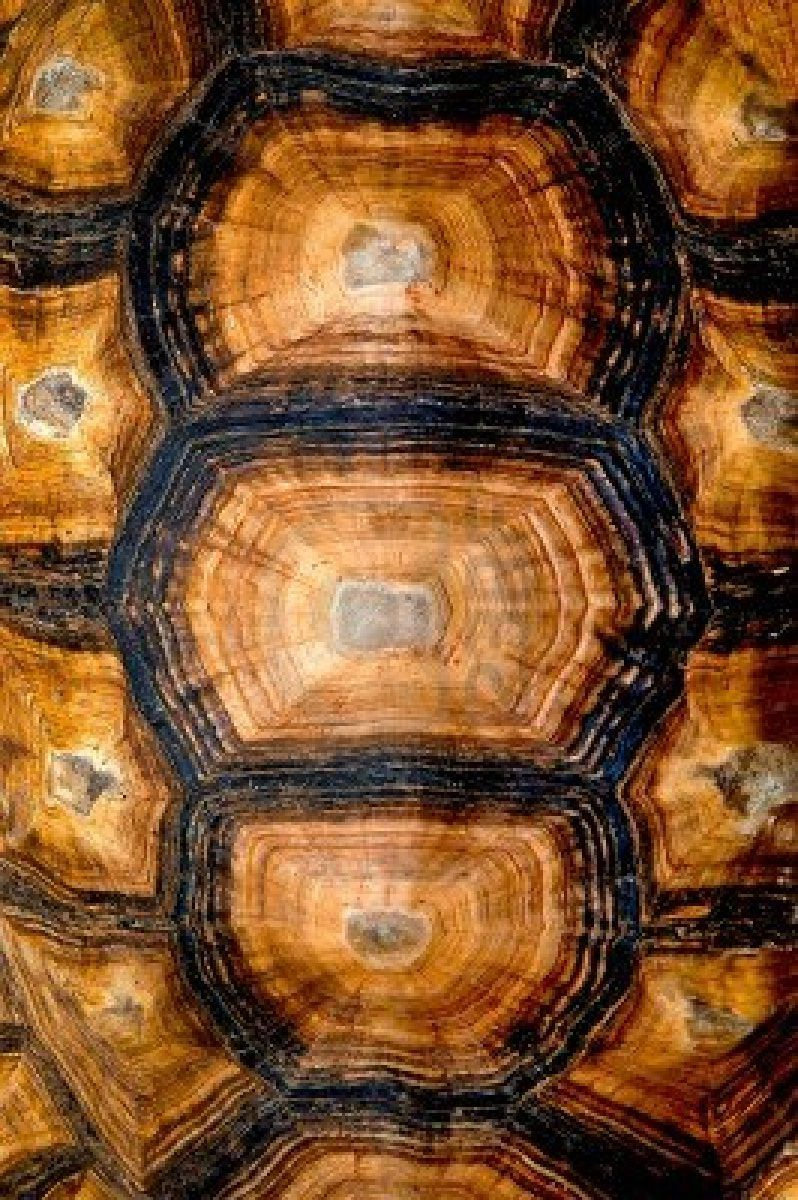 close up view of the hexagonal texture of a turtle shell true