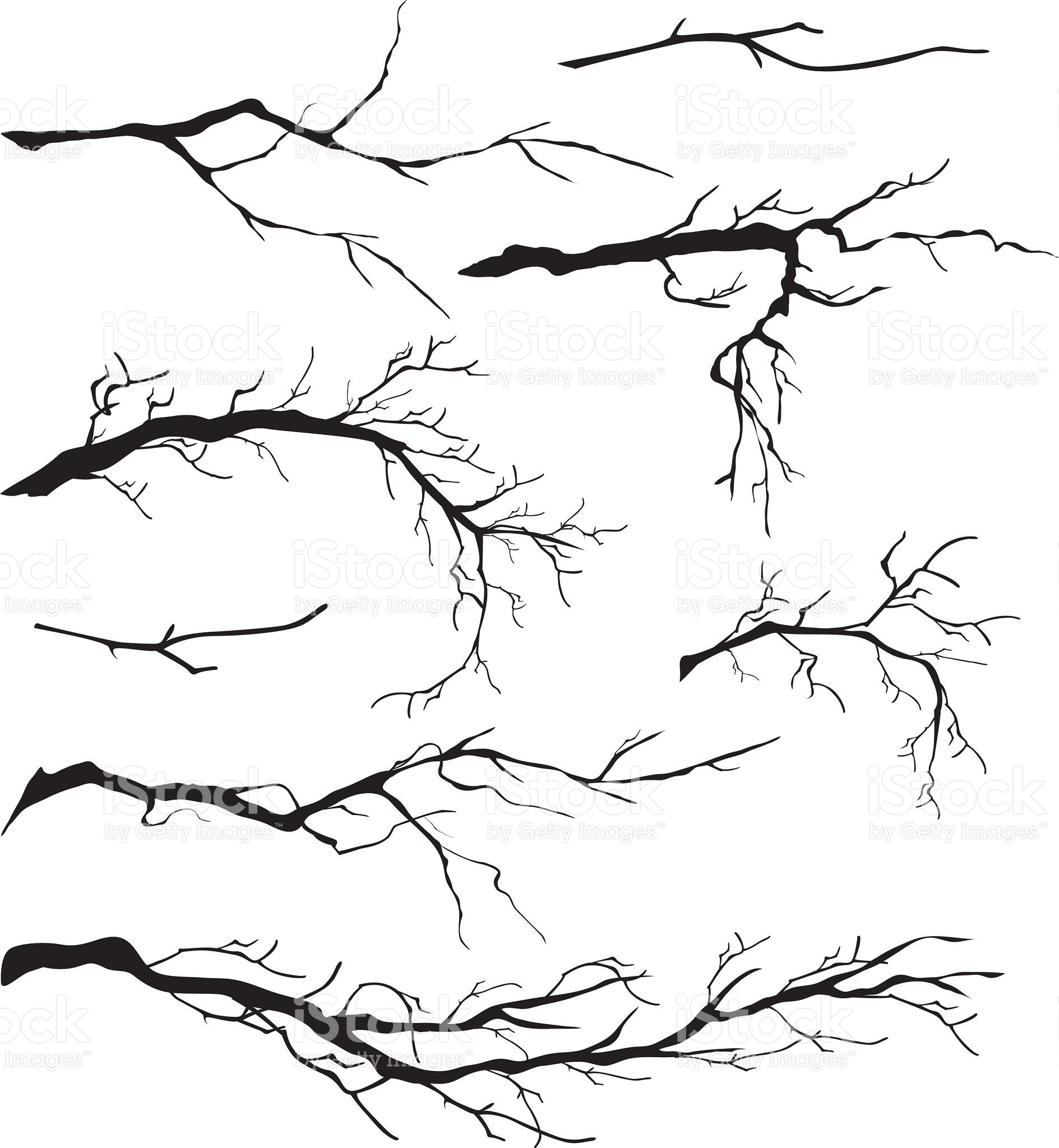 An Assortment of Bare Tree Isolated Branch Silhouettes. The branches…