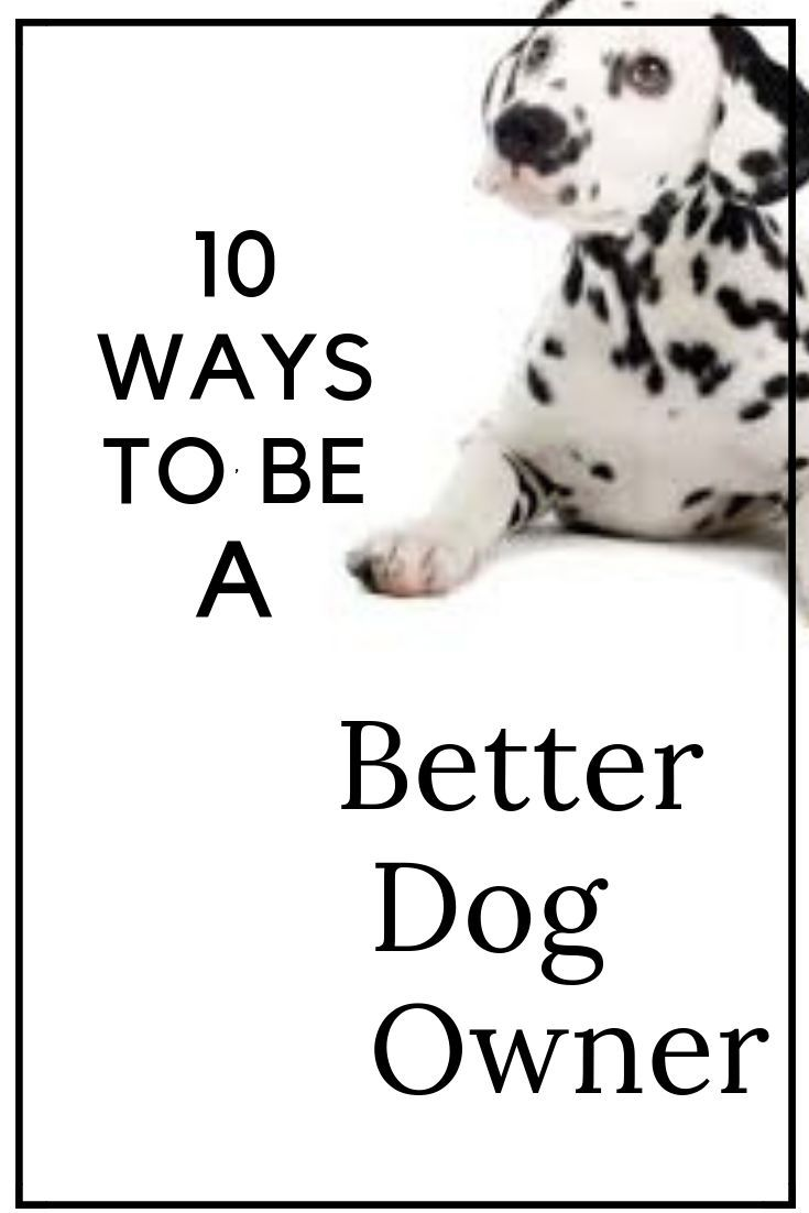 How to Be a Good Dog Owner recommend
