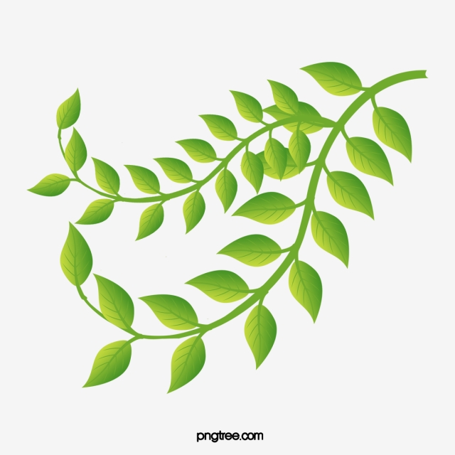 Fashion Fresh Green Leaves Vector Leaf Material Creative Green Leaf Png Transparent Clipart Image And Psd File For Free Download Leaves Vector Green Leaves Plant Leaves