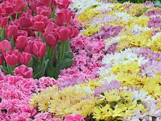 en iyi fikir flores preciosas para decorar uas ve cristal para mesa