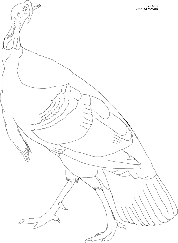 American Wild Turkey Coloring Page Turkey Coloring Pages Coloring Pictures Coloring Pages