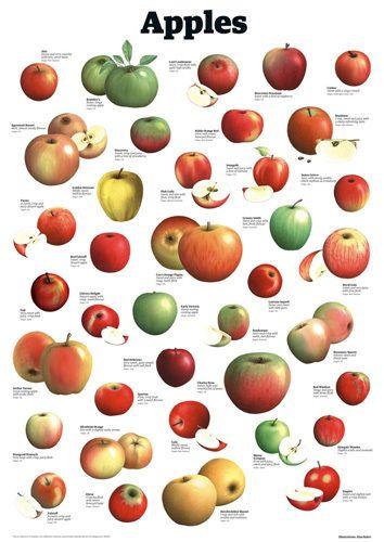 Apples Art Print By Guardian Wallchart Easyart Com Apple Art Print Fruits Images Apple Varieties