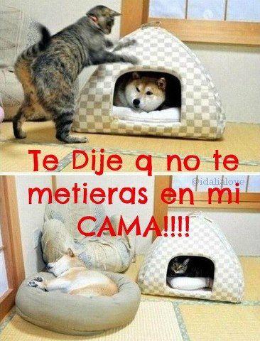 Gato Y Perro Peleando Por La Cama Fotos O Imagenes Portadas Para Facebook Dog Cat Pictures Funny Animal Pictures Cute Cats