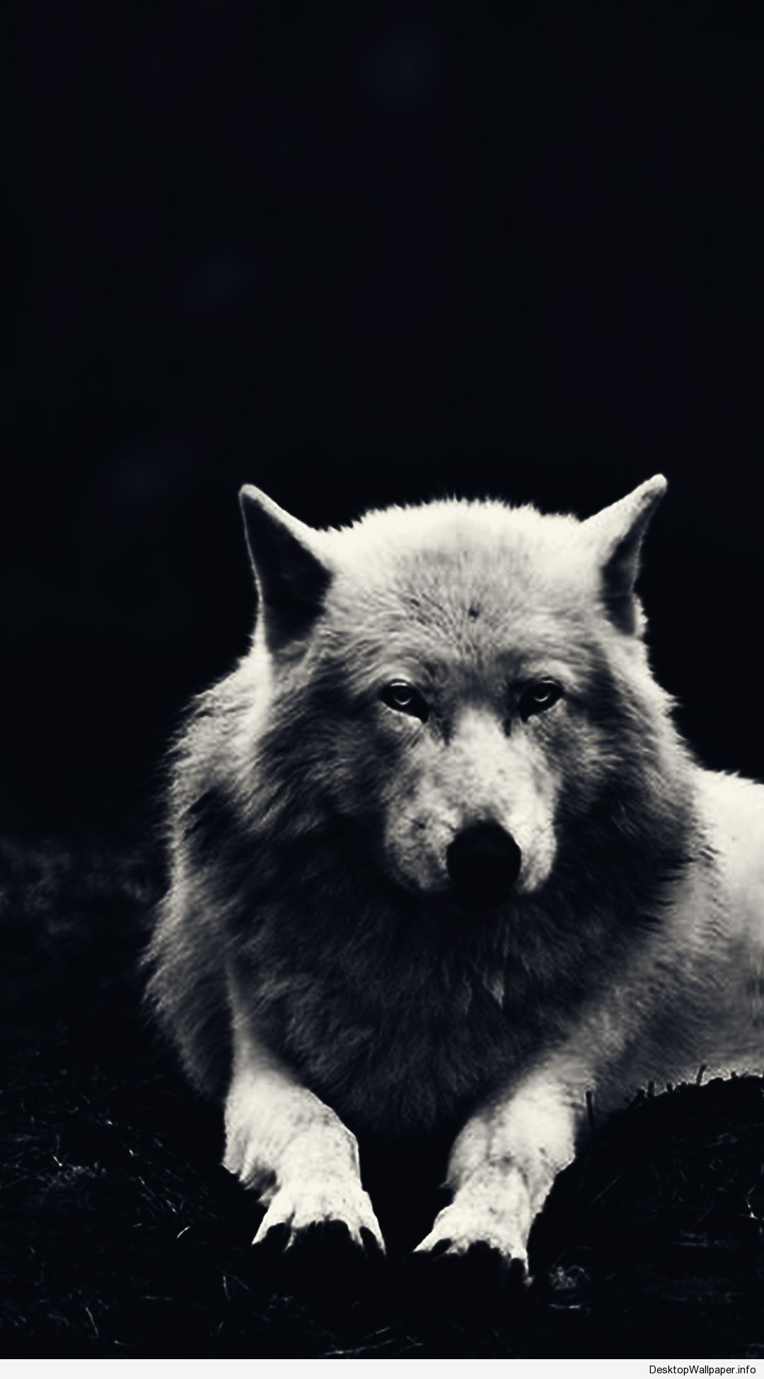 Black Wolf Wallpaper Pin On Hd Wallpapers