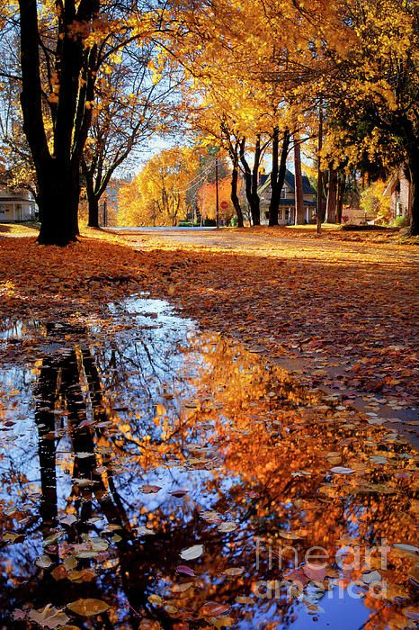 Streets Of Autumn Autumn Scenery Fall Pictures Scenery