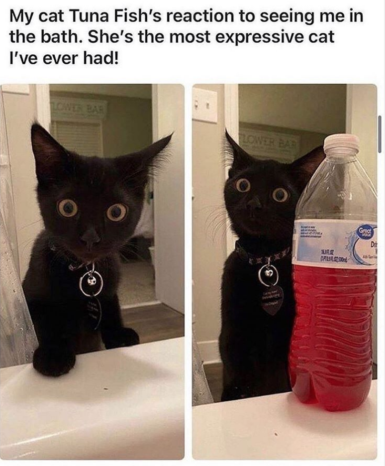 Hooray For Another Purrfect Caturday (37 Cat Memes)