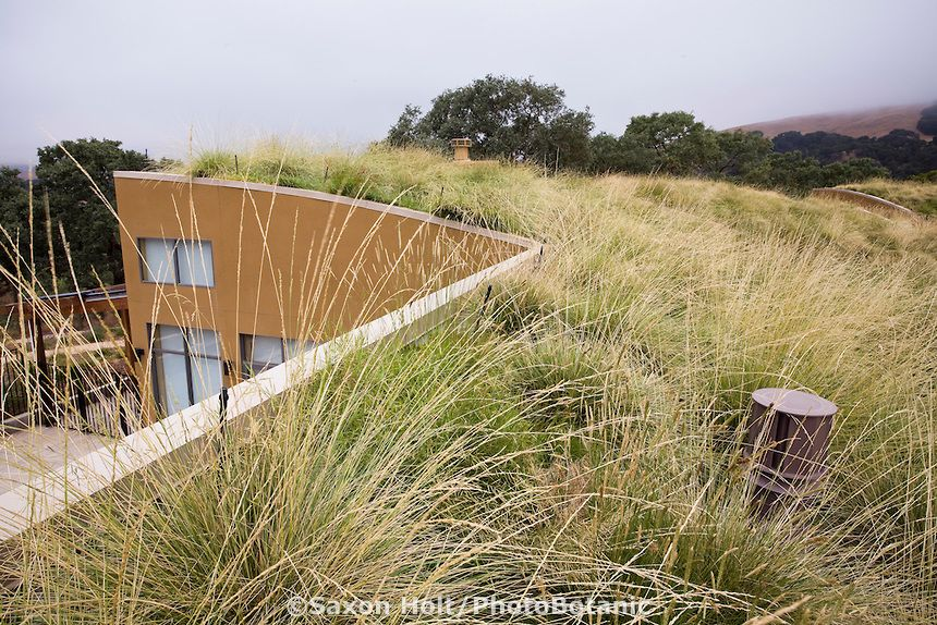 Grass Meadow Green Roof Garden With Atlas Fescue Festuca