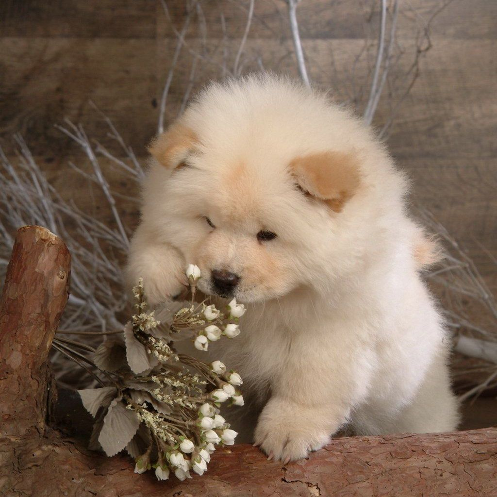 Flowers For Me Lazy Dog Breeds Cute Animals Animals