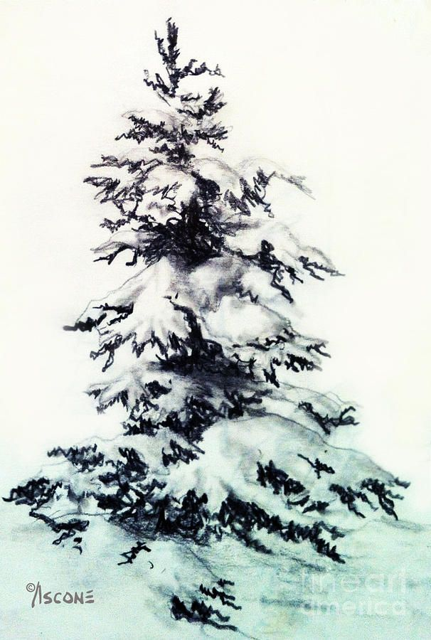 Christmas Charcoal Pencil Sketch 2020 Snow Covered Spruce by Teresa Ascone in 2020 | Winter drawings