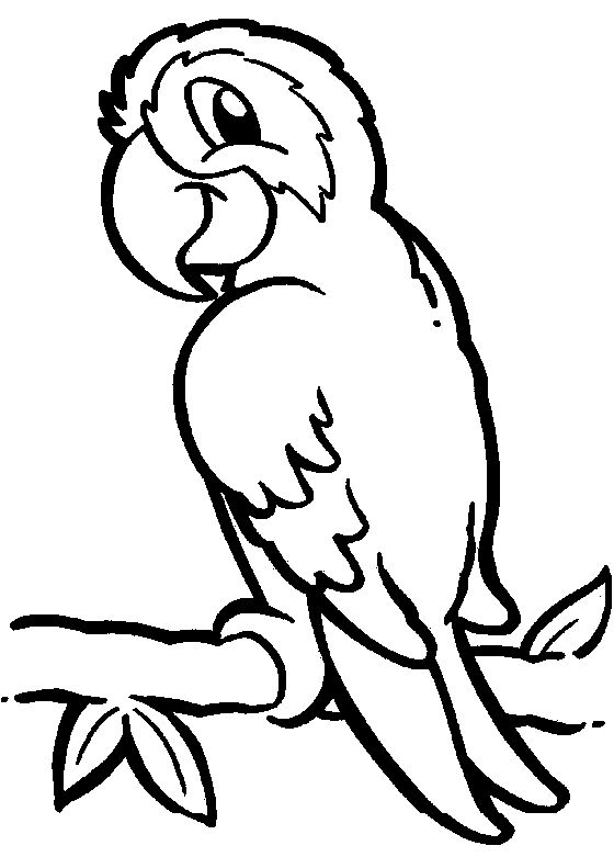 Parrot Coloring Pages Coloring Pages Bird Coloring Pages