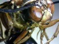 Image result for microscope wasp eyes