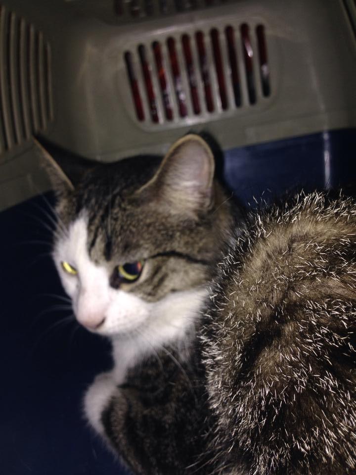 Kayla Lynn Horkavy The Meriden Humane Society Follow 14 Hrs Cat