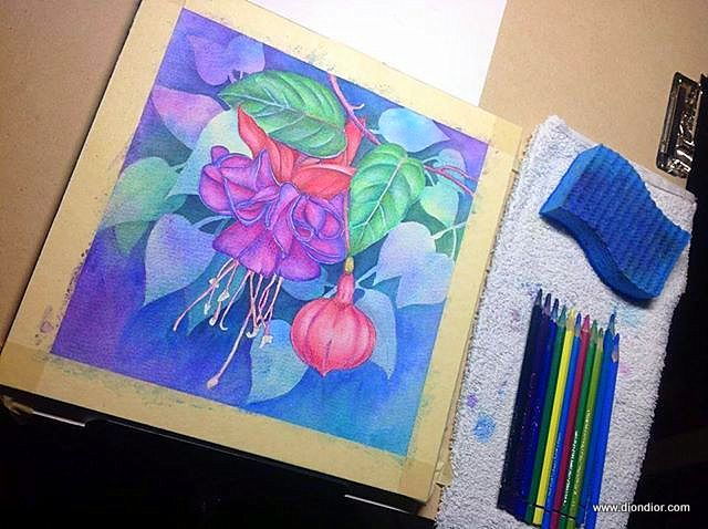 Watercolor Pencil Fuchsia Step By Step Watercolor Pencils