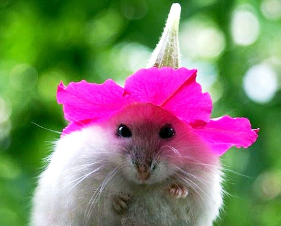 Цветы смешные картинки
