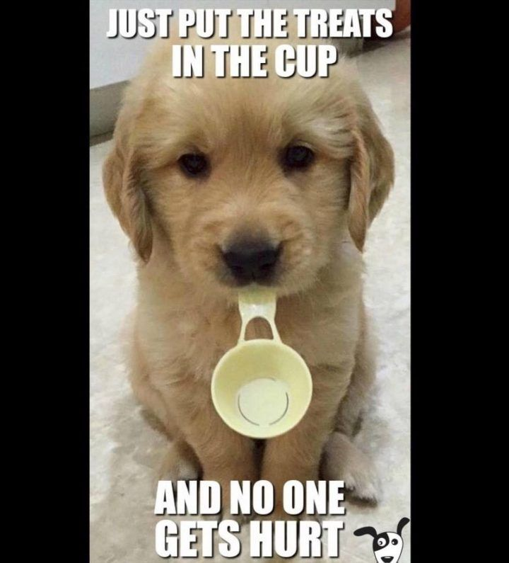 101 Best Funny Dog Memes To Make You Laugh All Day In 2021 Funny Dog Memes Dog Quotes Funny Dog Memes