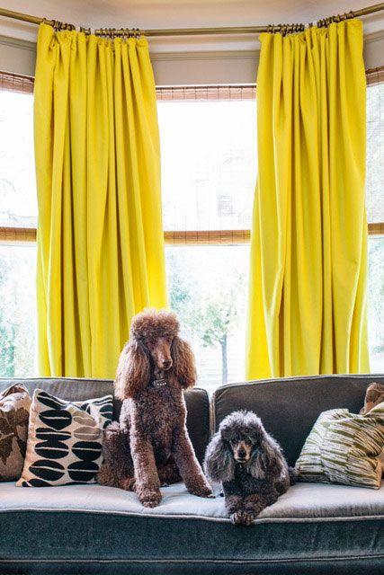 Poodles.....curtains!