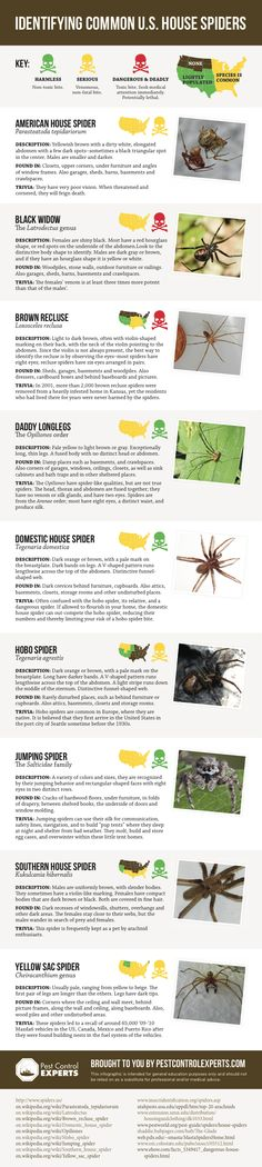 Could you tell the difference between a deadly brown recluse and a common basement spider? Check out this chart and see if danger is lurking on eight