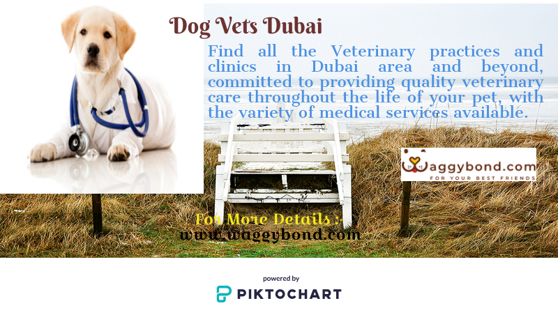 Find All The Veterinary Practices And Clinics In Dubai Area And Beyond Committed To Providing Quality Veterinary Care Throughout Veterinary Care Pet Clinic Cat Vet