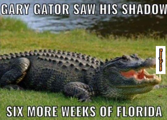Gary Gator Saw His Shadow Six More Weeks Of Floridameme Tattoos