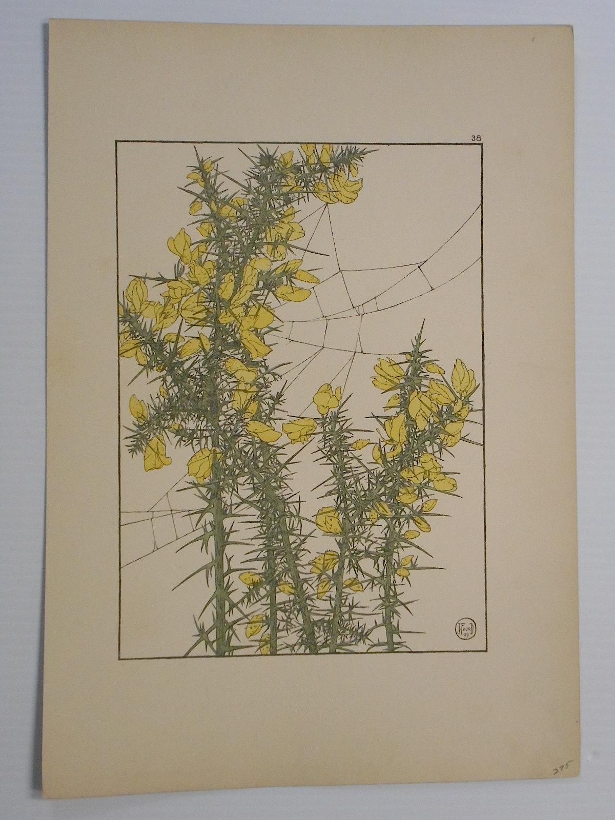 Jeannie Foord Art Nouveau Botanicals Prints Pair