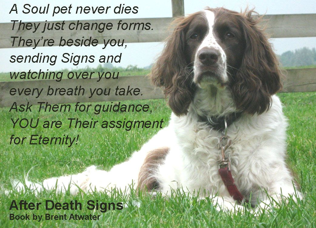 Dealing With Loss Of Pet Signs From Heaven Pet Animal Souls Brent