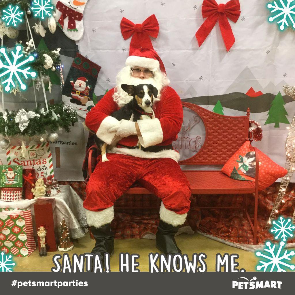 Here S My Pet Photo Animal Photo Holiday Decor Petsmart