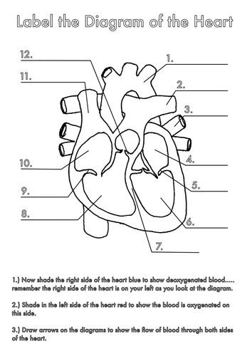 Labeling Diagrams Of the Heart Luxury Four Human Biology ...