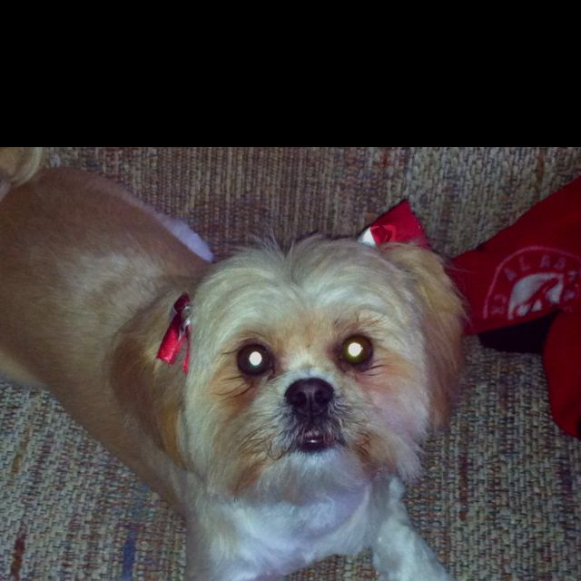 My sweet baby Roxie and her Bama bows. :)