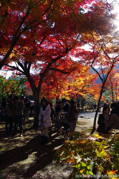 Beautiful autumn colors in Arashiyama's Tenryuji Temple (Kyoto, November 2012).