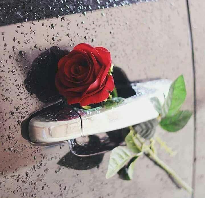 Pin De Lolo Kh En Red Rose ورد أحمر