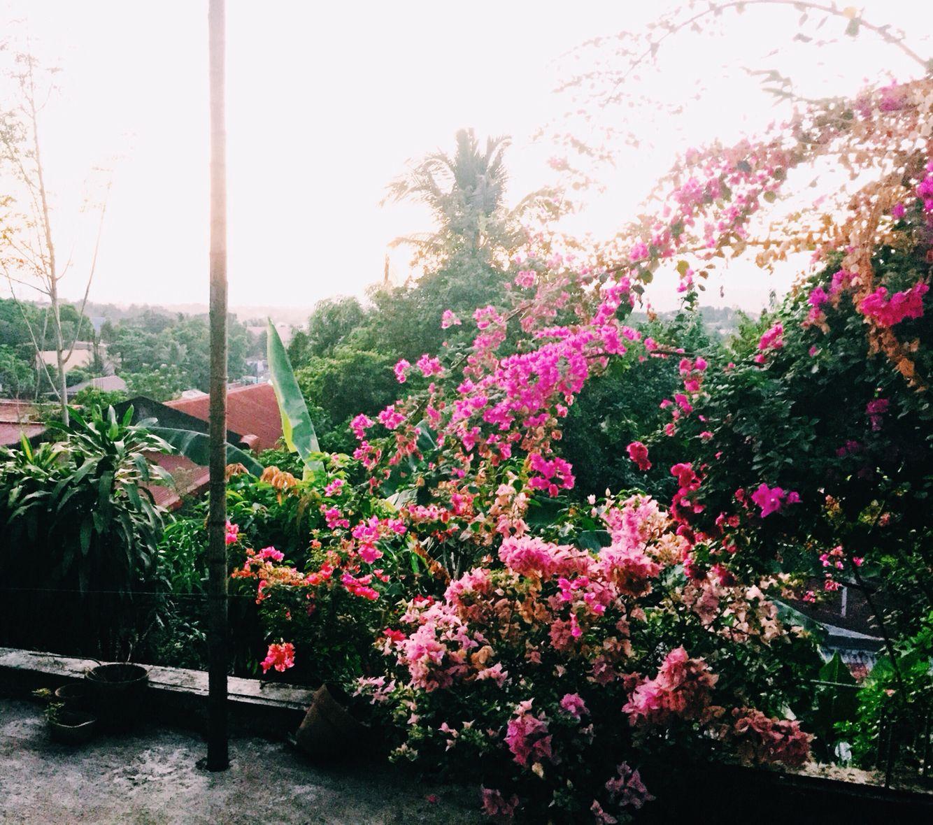 April 3   Flowers of Modesta
