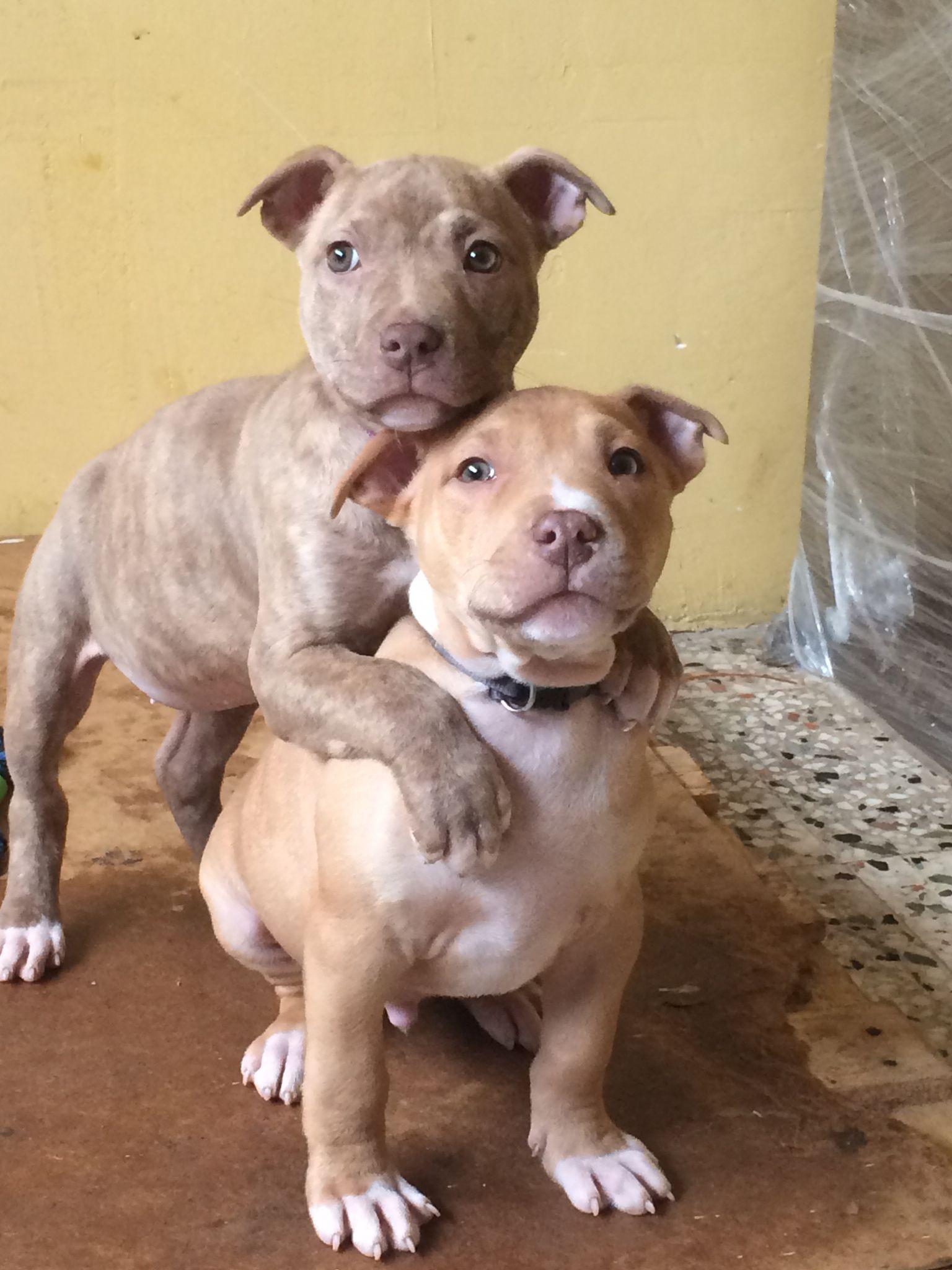 Pin By Simone Perkins On Animals Animals Pitbulls Dogs