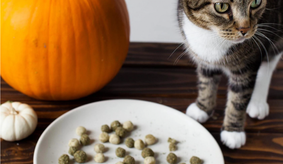 DIY Cat Treats Mini Pumpkin Spice Doughnut Holes for Your