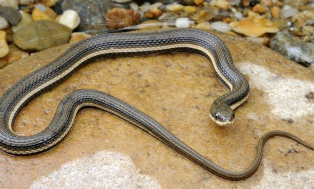 12 Fabulous Animals That Start With The Letter Q Animals Snake