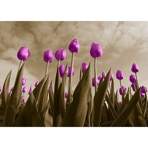 East Urban Home Tulips Graphic Printing   Tulips graphic print East Urban Home size 428 cm H x 60 cm W x 05 cm D color purple wall col