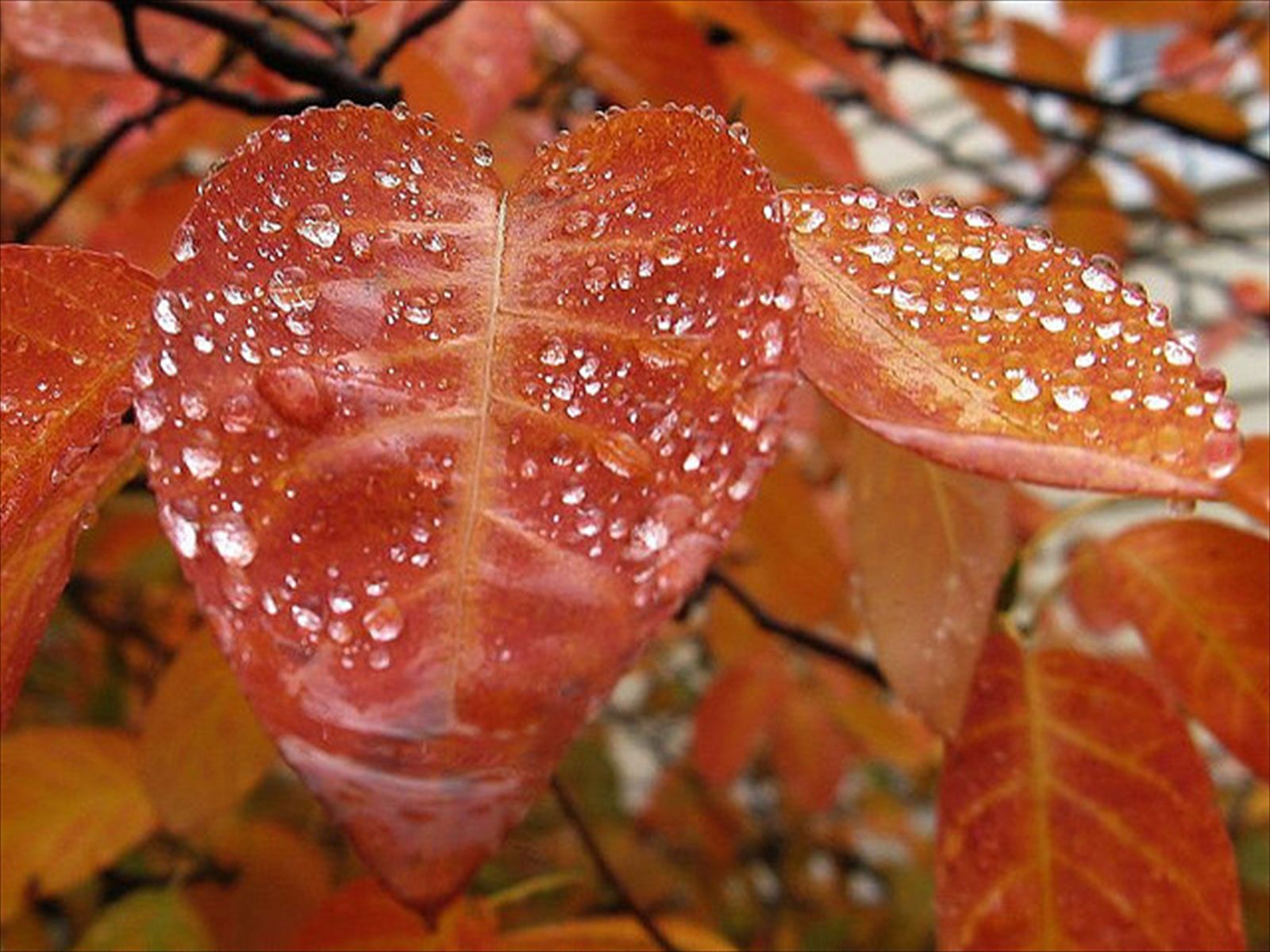 Rain Wallpaper Best Collection Of Rainy Desktop Hd Wallpaper Rain Photography Amazing Nature Photography Rain Wallpapers