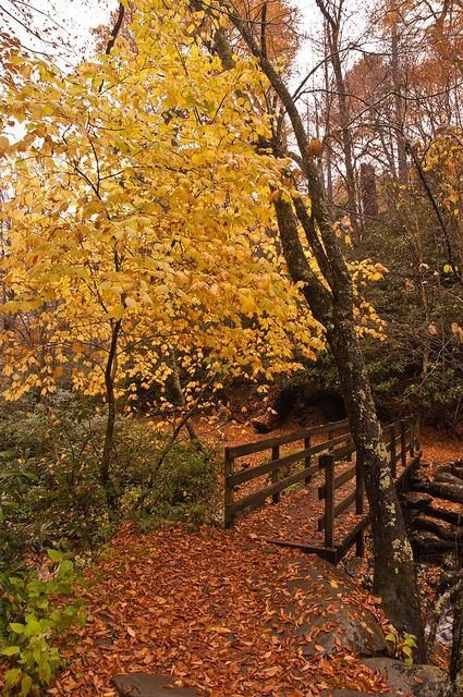 ancientdelirium:  Fall in the Smoky Mountains by Scruffy Eagle on Flickr.