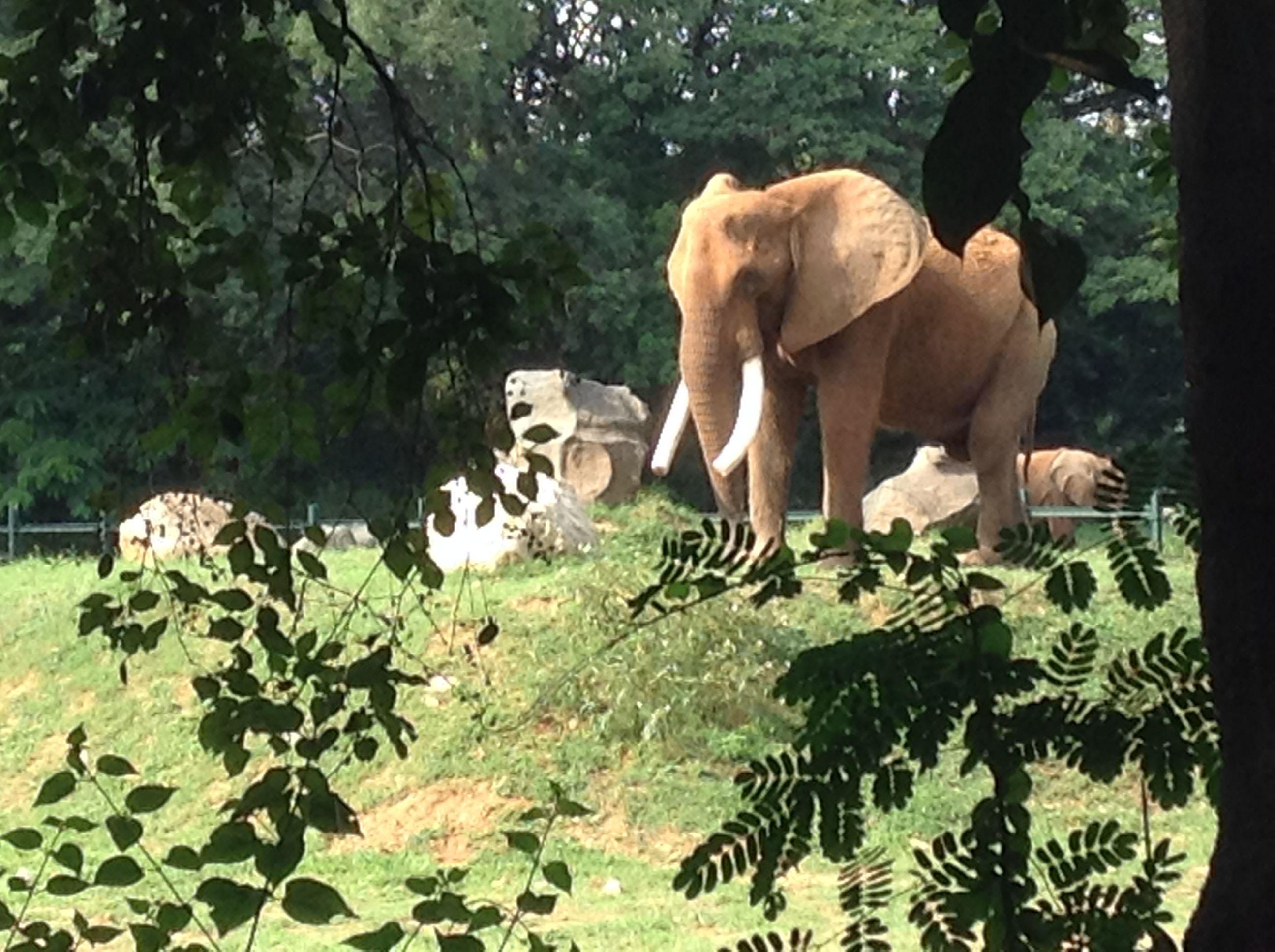 018436656e0e411a70f84fd23a946e04 - Mysore Zoo Sri Chamarajendra Zoological Gardens