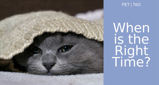Kidney Failure in Cats Knowing the Right Time to