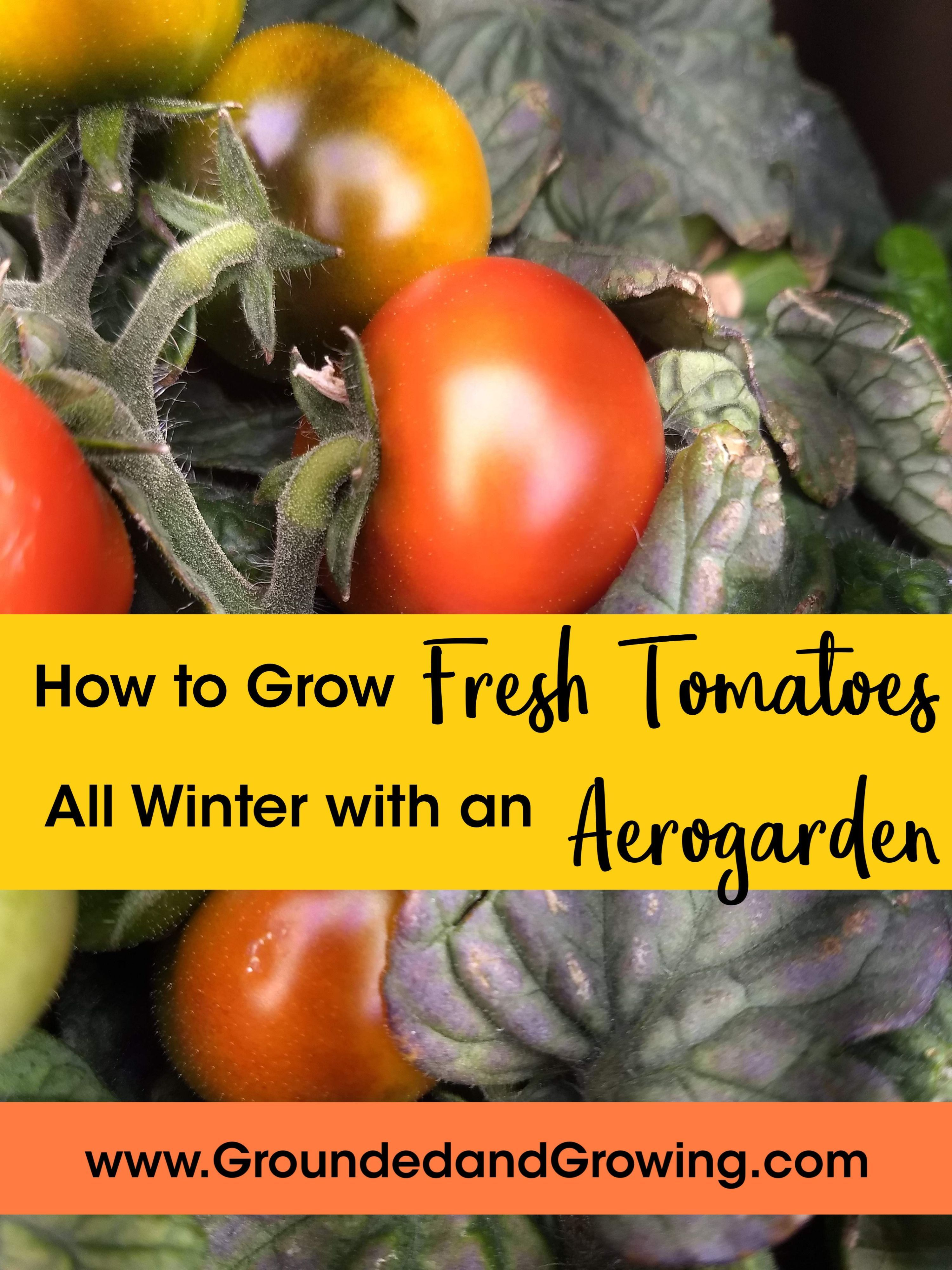 How To Grow Fresh Tomatoes All Winter With An Aerogarden 400 x 300
