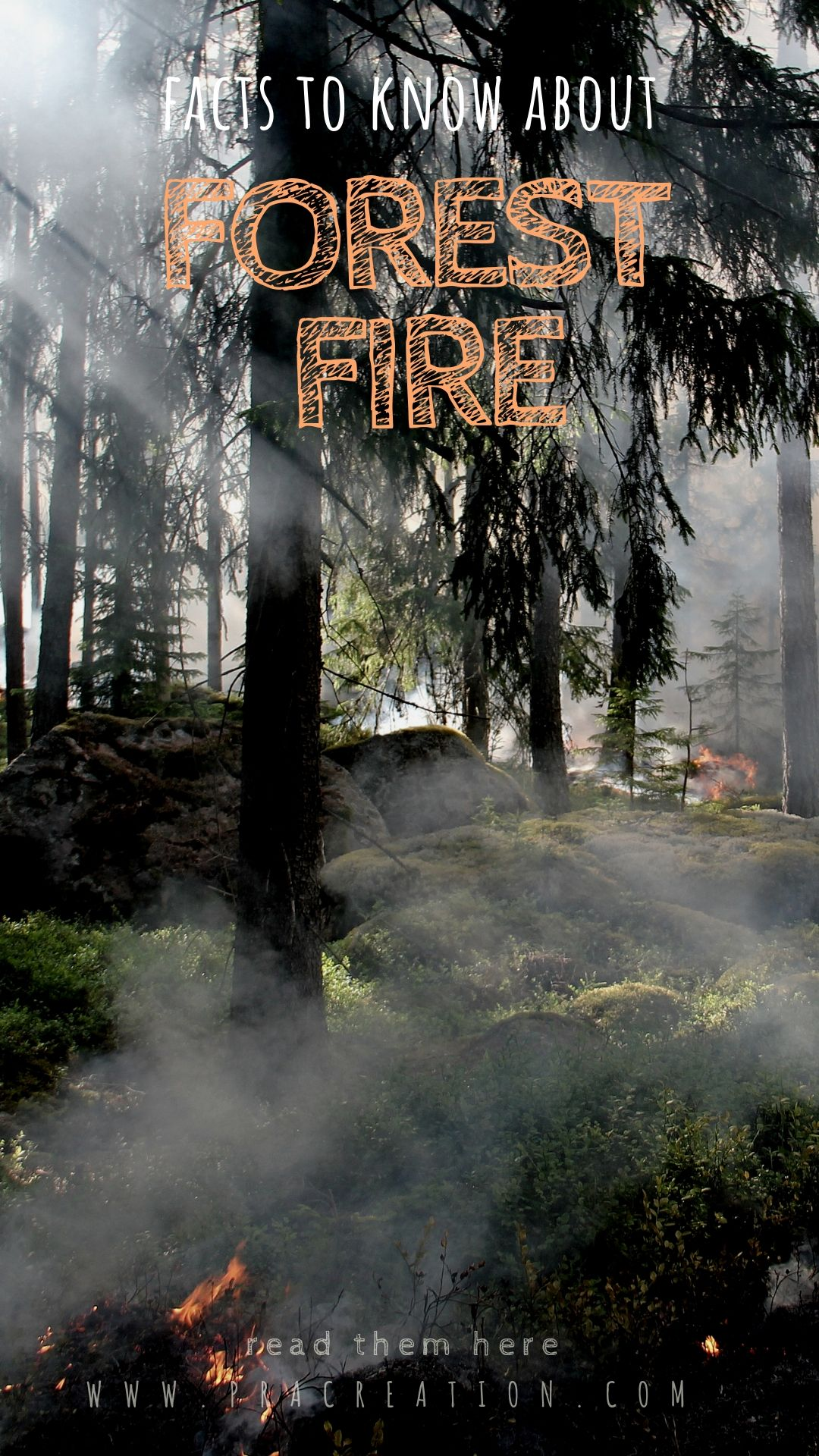 Burning Trails Story Of Forest Fire Short Story Ecology