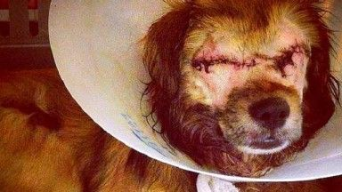 This Dog Miraculously Survived Two Murder Attempts this should never had happened but it will never stop - thipack!!!!!!