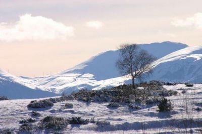 Blog de artistesensemble :Artistes Ensemble, Entre l'arbre et la montagne
