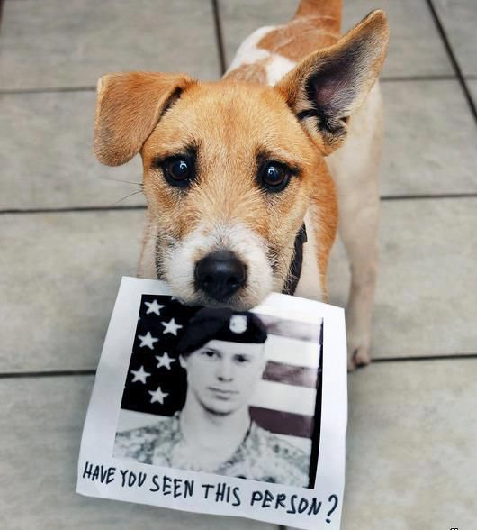 Bring Sgt Bowe Bergdahl home Dog pictures, My animal, Dogs