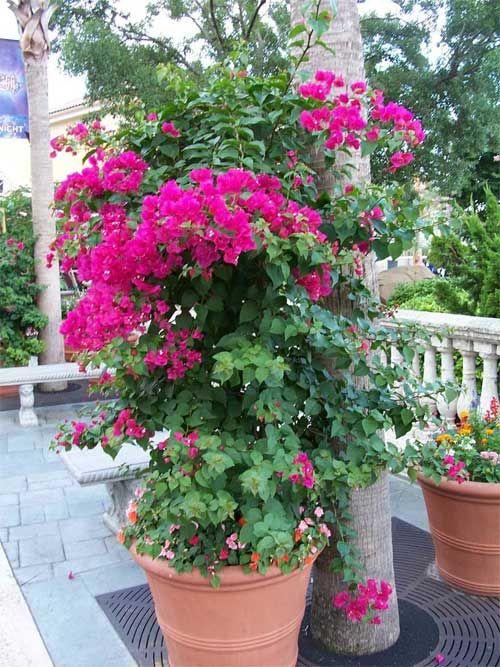 Best Shrub for Full Sun Potting Outdoor Plants The 10 Best